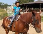 tabor Western koníčky a koniny