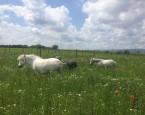tabor Denný tábor Leto s poníkom - BRATISLAVA