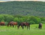 Predĺžený víkend s koňmi